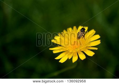 small insect working on a yellow flower