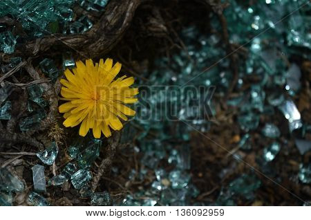 Born from broken glass flower in the forest