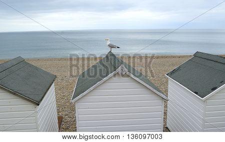 Beach huts with gull in Seaton Devon