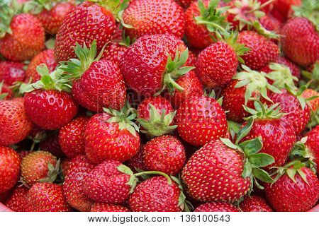 Background from freshly harvested strawberries directly above.