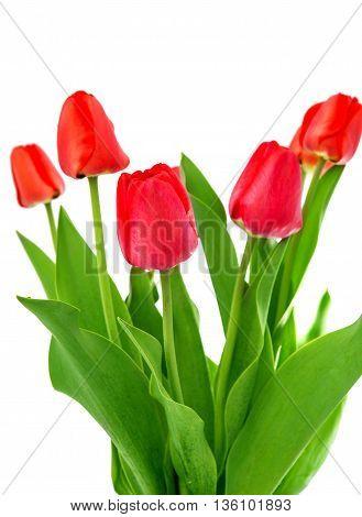 arrangement, birthday, bouquet, tulip on white background