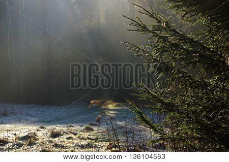 National park Ceskosaske Svycarsko in north Bohemia