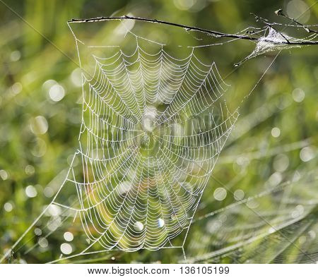 spider web covered in water drops
