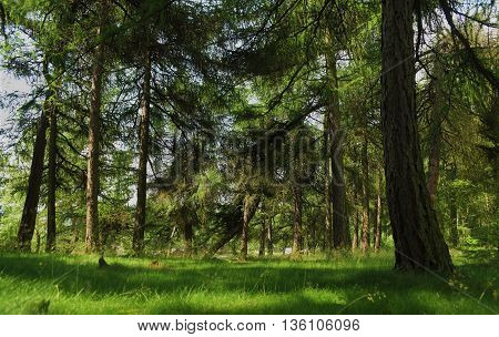 Tisa rocks with green forest in hot summer