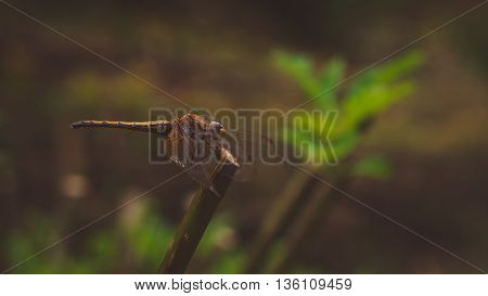 a dragon fly sitting on a stem, selective focus