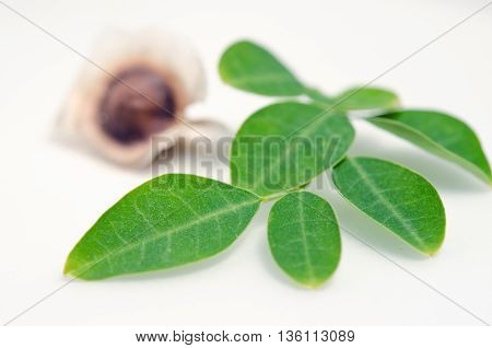 Moringa (Other names are Moringa oleifera Lam. MORINGACEAE Futaba kom hammer vegetable hum Moringa hum bug Moringa bug Hoo) leaf and seed isolated on white background