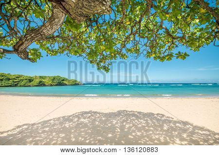 Under the shade on a beautiful sandy tropical beach in Bali.