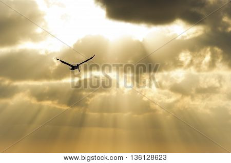 Bird silhouette is a bird spreading it's wings soaring against an ethereal sun beam sky.