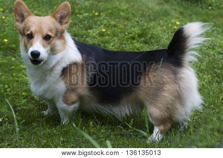 a lovely little dog staring at the camera