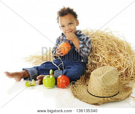 An adorable preschooler barefoot and in overalls, munching on apples  while sitting by a haystack.  On a white background.