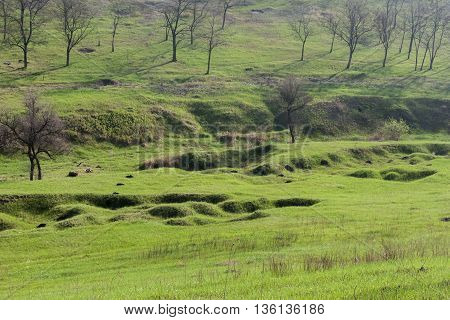 Landscape with green grass and trees. Green prairie landscape and couple of trees.