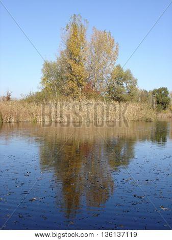 blue sky dry reeds blue water .