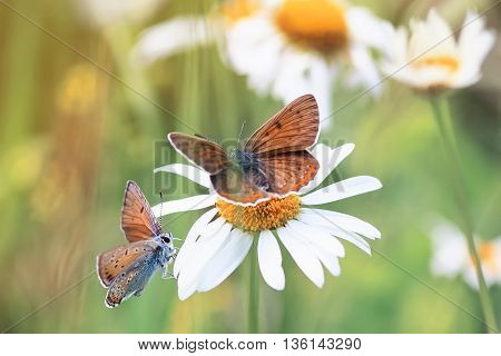 two little butterflies sitting on the grass on a bright Sunny background