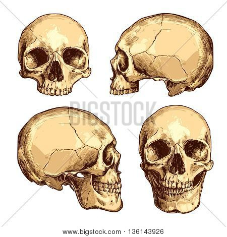 Collection Of Hand Drawn Colorful Skulls. Vector Skulls Illustrations