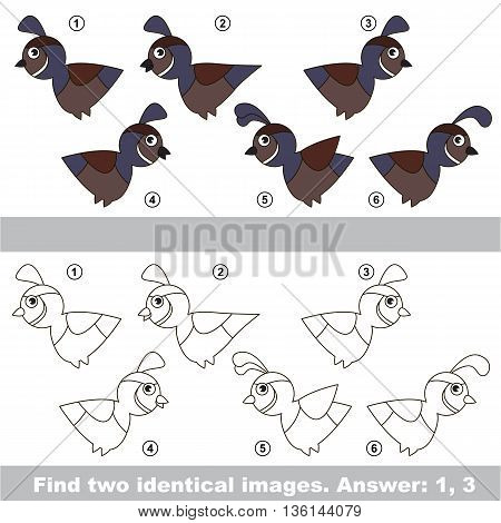 The design difference. Vector visual game for kid education. Simple level of difficulty. Easy educational game. Task and answer. Find two similar Quails.