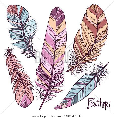 Feathers Collection. Colorful Hand drawn Illustrations Of Feathers