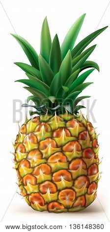 Pineapple fruit on a white background. Vector illustration
