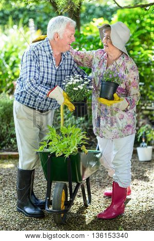 Happy senior couple holding flower pots while standing in garden