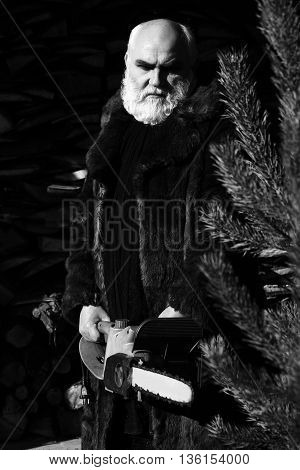Old bearded man with long silver beard and moustache in fur coat holding big chainsaw sunny day outdoor on wood background near fir tree black and white