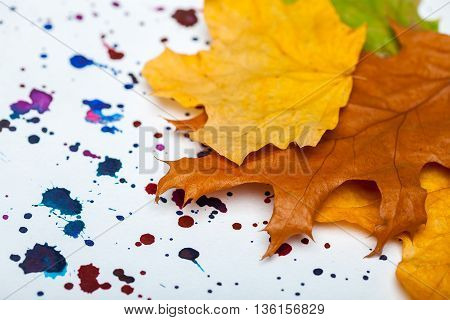 autumn seasonal dried leaves arrangement yellow green and brown color lying on white background with colorful watercolor stains for applique