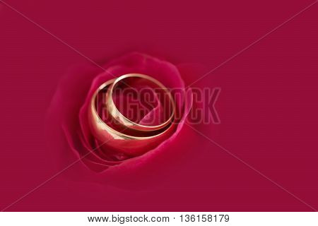 Two Wedding Rings On Rose