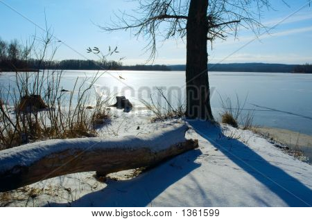 Fallen And Standing Trees On Winter River Shore