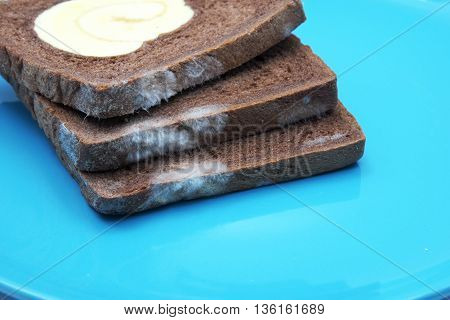 Moldy bread, chocolate bread with vanilla roll at center on blue plate. Focus on mold. Space for texts.