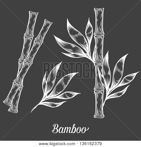 Bamboo Stem Branches And Leaf Vector Hand Drawn Illustration. White Bamboo On Black Background. Engr