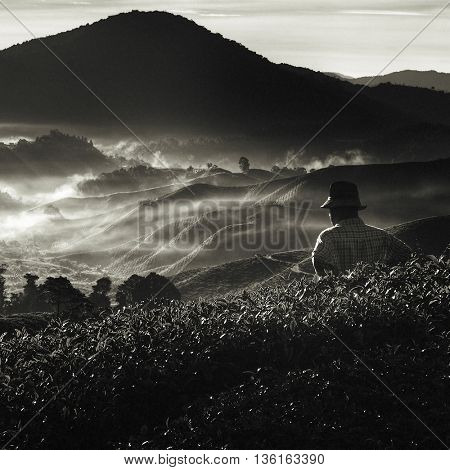 Farmer at Tea Plantation in Malaysia Concept