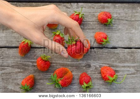 Summer Berries Topic: Man Is Holding A Ripe Red Strawberries On The Table Background