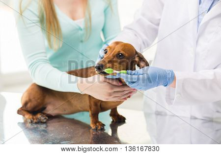 medicine, pet, animals, health care and people concept - close up of woman with dachshund and veterinarian doctor brushing dog teeth with toothbrush at vet clinic