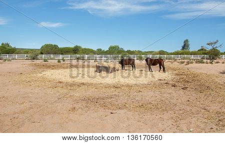 Western Australian farmland landscape with two chestnut horses and hay feeder with fence, native flora and a blue sky.