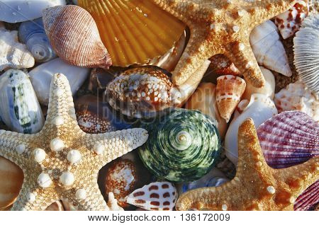 Beach still life shot sea shell and starfish Concept