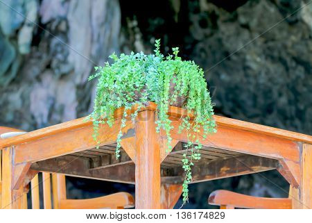 Beautiful foliage in the vase on a wooden table.