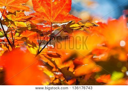 Colorful leaves in Autumn season