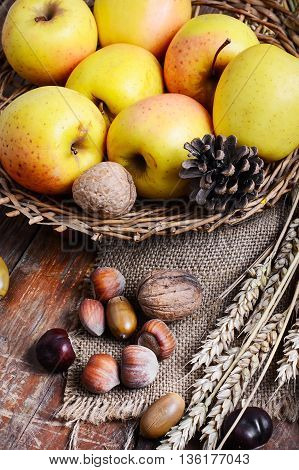 Autumn Still Life With Apples And Nuts