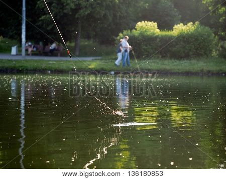 Fishing on the city pond. Fishing lines crucian carp fish. Summer a lot of sun