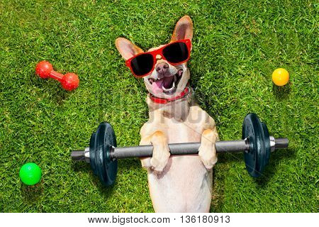 Personal Trainer Sport Fitness Dog