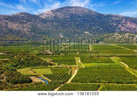 View of a vineyard in Dalmatia Croatia.