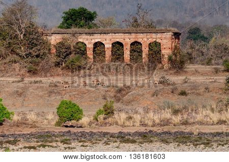 Beautiful old abandoned Panna Fort river and rocky riverbed at Panna National Park Madhya Pradesh India. It is a tiger reserve. located in Panna and Chhatarpur districts of Madhya Pradesh in India area of 542.67 km2