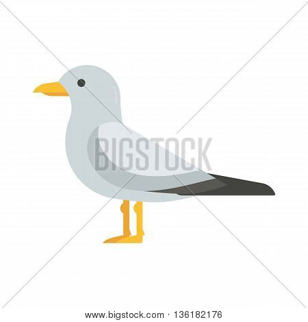 Seagull Bird Vector Illustration