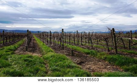 Landscape With Winter Vineyard