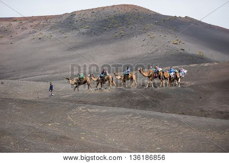 Lanzarote, Canarian Islands - 31 March 2015: touristic camelcade on Lanzarote of the Canary islands