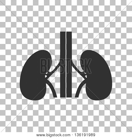 Human kidneys sign. Dark gray icon on transparent background.