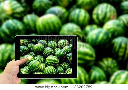 Tablet Photography Concept. Taking Pictures On A Tablet. Screensaver From Heap Of Green Watermelons