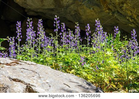 purple flowers in Samaria Gorge in central Crete Greece
