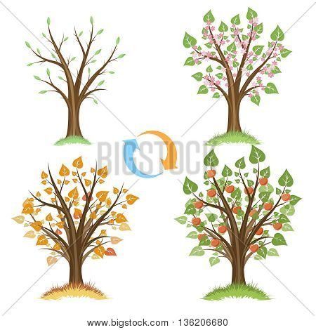 Apple tree seasonal cycle. Season nature, plant apple, cycle natural, apple garden, fruit apple growth, vector illustration