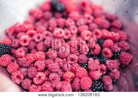 Organic Handpicked Home Orchard Raspberries,blackberries From Bushes At The Backyards In The Natural
