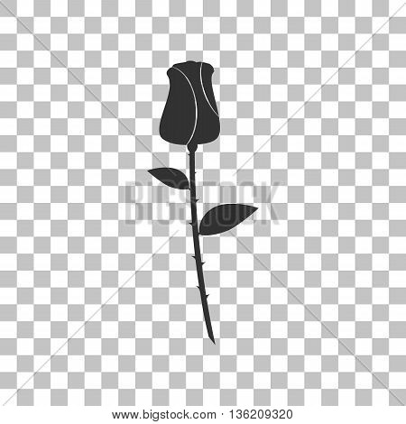 Rose sign illustration. Dark gray icon on transparent background.
