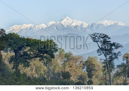 Beautiful view of trees of Silerygaon Village with Kanchenjunga mountain range at the background moring light at Sikkim India